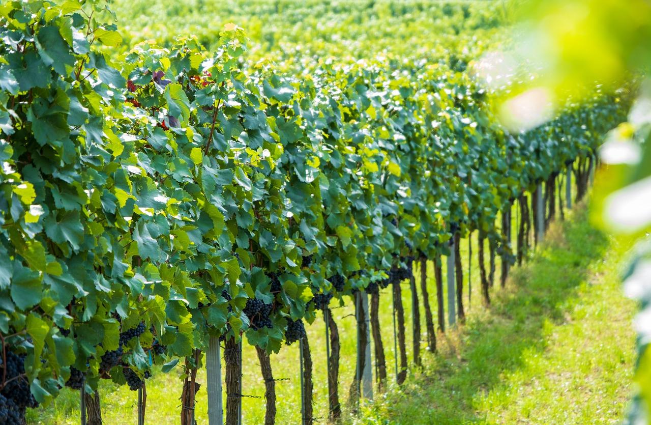 Wein Wachau