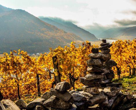 Wachau Weinreben Herbst